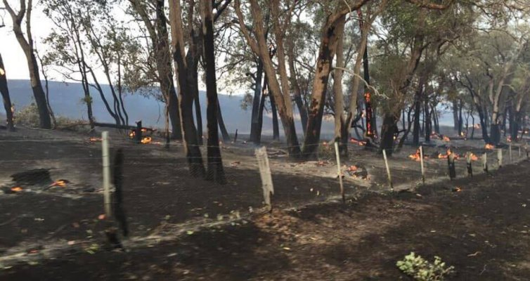 Fencing For Fires - Fence